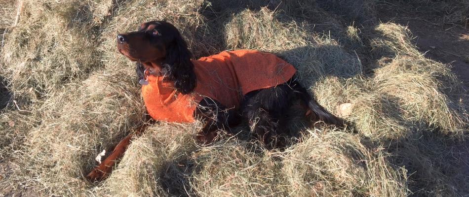 Hunde-Strick-Pullover