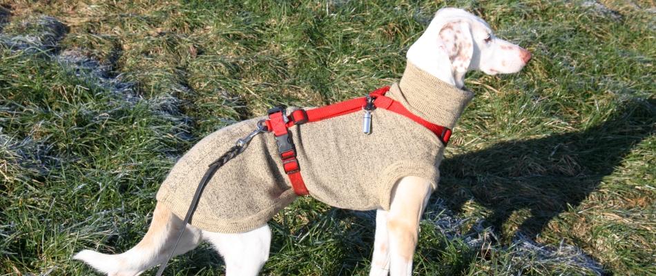 Hunde-Strick-Pulover mit Pflegestellengeschir